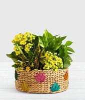 Yellow flower dish garden plant