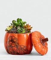Succulent Pumpkin...