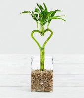 Be Still My Heart Valentine Bamboo - Good