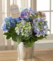 Blue Hydrangea Plant by Hallmark