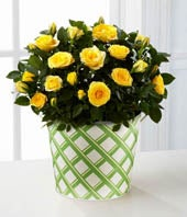 Yellow mini rose plant for delivery in decorative tin