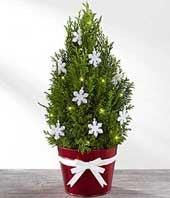 Sweet Holiday Mini...